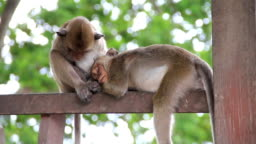 Sleeping monkeys.