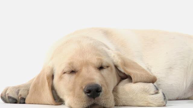 Sonno cucciolo