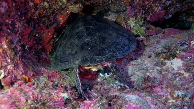 sleeping sea turtle - crevice stock videos & royalty-free footage