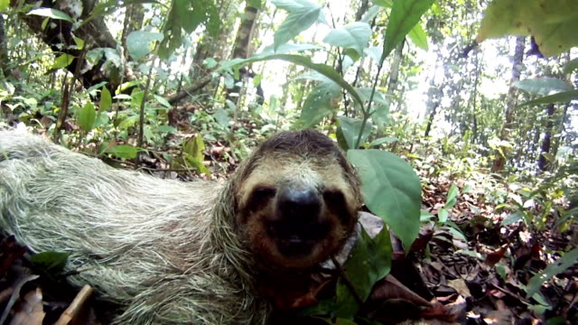 sleepy sloth - laziness stock videos and b-roll footage