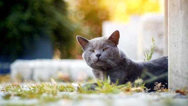 Sleepy Straße Katze von einem Nickerchen erwacht