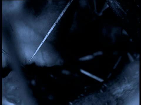 stockvideo's en b-roll-footage met slender loris picks and eats berries in tree, india - gepunt