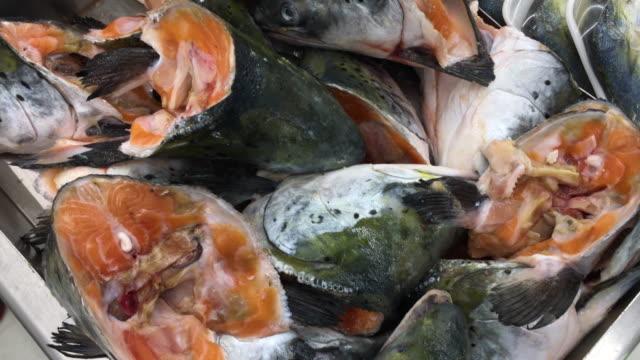 vídeos de stock e filmes b-roll de slices of fish at grocery store - peixe congelado