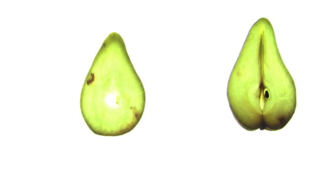 Slices of pear appear in a row on a white backlit surface.