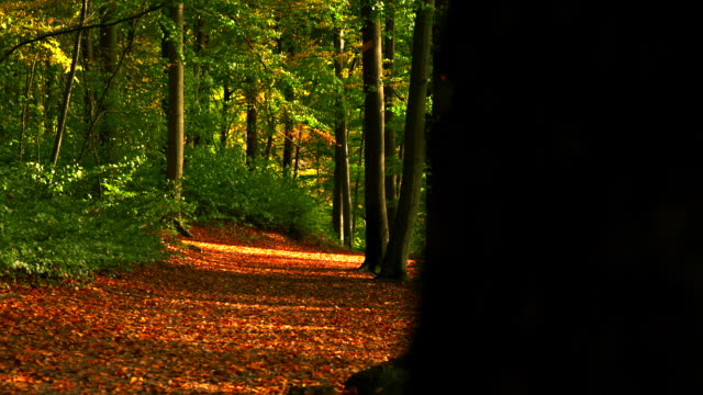 slide on autumn forest path full of leaves