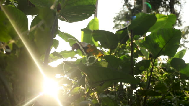 Slide through rainforest vines, sun peaking through