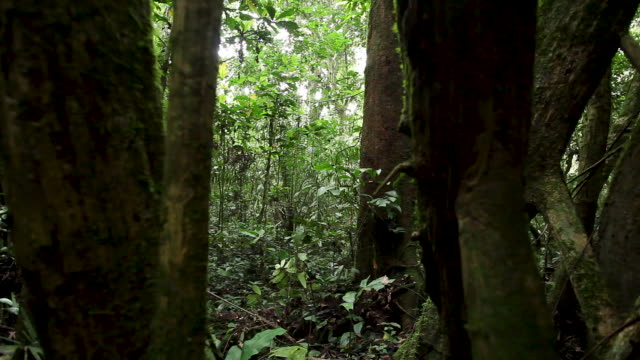slide through tree trunks to reveal forest beyond - rainforest stock videos & royalty-free footage