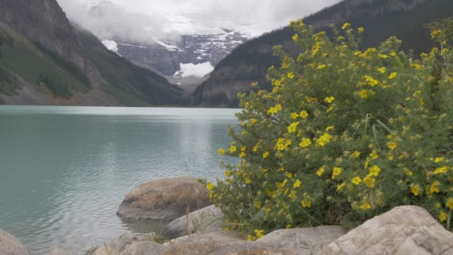 slider shot of the shores of lake louise, banff national park, alberta, canada, north america - vild blomma bildbanksvideor och videomaterial från bakom kulisserna