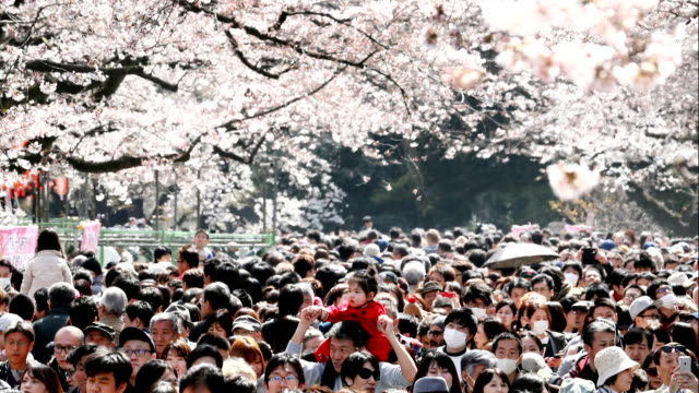 slideshow of photographs set to music show off some of the best moments captured by photographers for the asahi shimbun during this year's... - blossom stock videos & royalty-free footage
