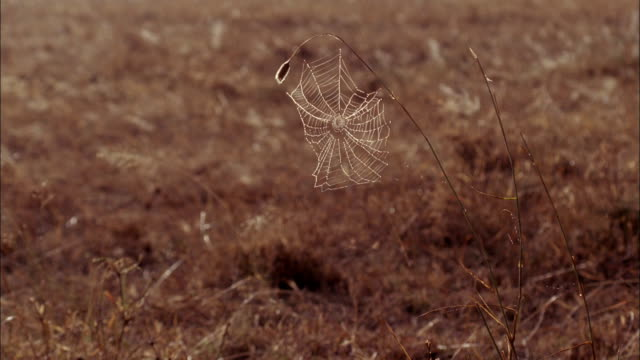 a slight breezes moves a spider that clings to its web. - spider web stock videos & royalty-free footage