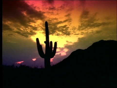 slight pan of silhouette of cactus in desert at sunset - cactus silhouette stock videos & royalty-free footage