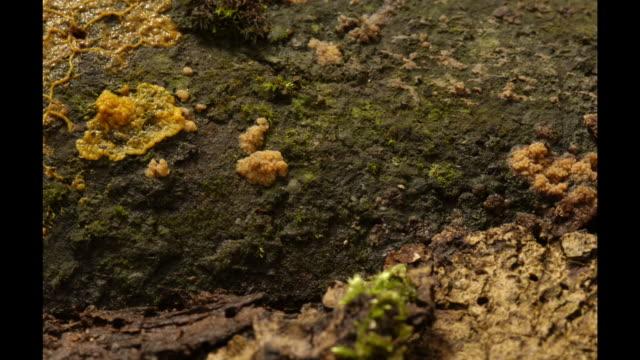 vídeos y material grabado en eventos de stock de slime mould grows and spreads across a rocky surface. available in hd. - animal microscópico