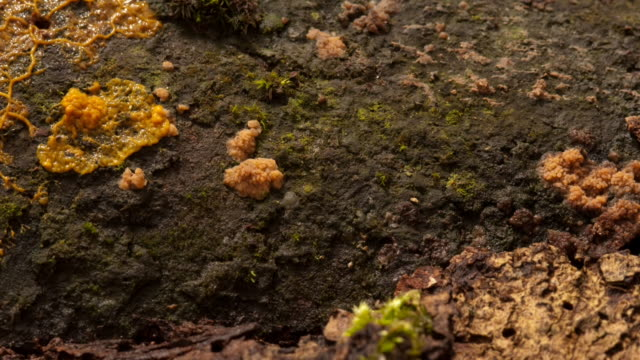 slime mould pulses and spreads. available in hd. - slimy stock videos and b-roll footage