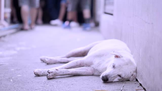 slo mo Dog sleep