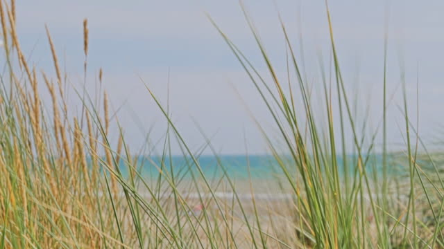 slo mo. wind blowing long grass, sea in background and a seagull flying by. - sea grass plant video stock e b–roll