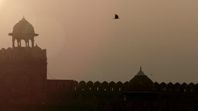 slomo bird flies over mughal building, india - one animal stock-videos und b-roll-filmmaterial