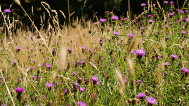 slomo butterflies, bumblebees, and other insects fly around wildflowers - wildflower stock videos & royalty-free footage