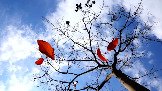 Slomo Falling Leaves From Blue Sky