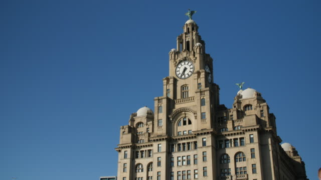 slomo gull flies past royal liver building, liverpool - inquadratura fissa video stock e b–roll