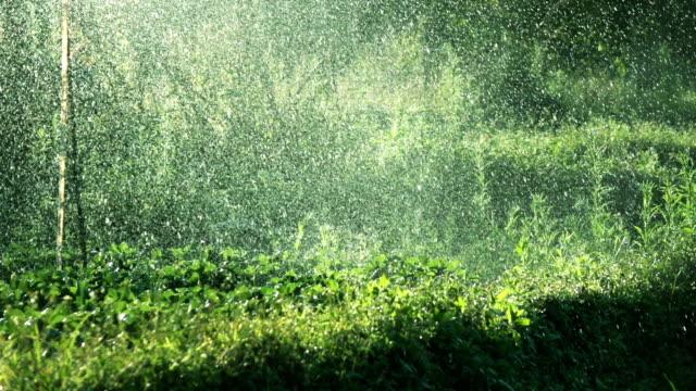 Slomo Water Besprinkle.