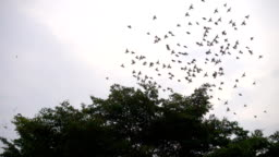 SLOMO-Birds Flying Around a Tree