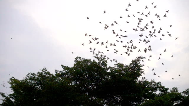 slomo-birds flying around a tree - flapping wings stock videos & royalty-free footage