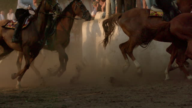 slomos of horses in a traditional race - gruppo di animali video stock e b–roll