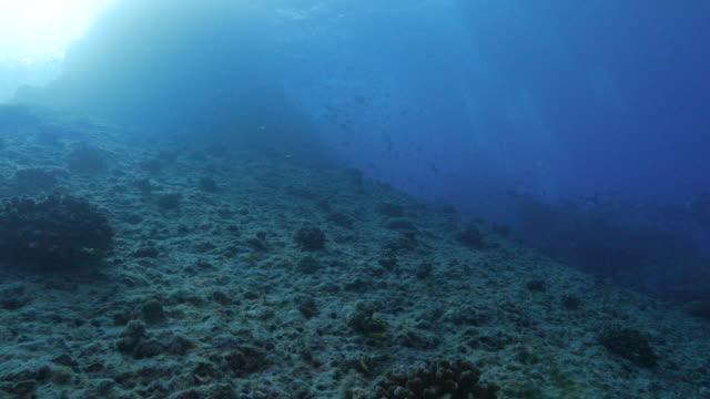 vídeos de stock, filmes e b-roll de inclinação da montanha submarina - ponto de vista de mergulhador