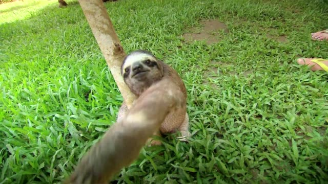 sloth - costa rica stock videos & royalty-free footage
