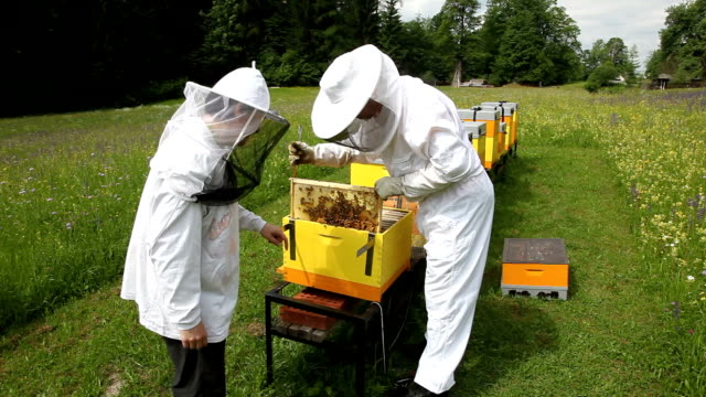 slovenia, kranjska gora, ratece, pair of farmers controls honey production of their bees - schutz und arbeitskleidung stock-videos und b-roll-filmmaterial