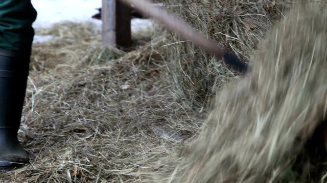 slovenia, upper carniola, bovec, farmer who collects the hay with the gallows - fieno video stock e b–roll
