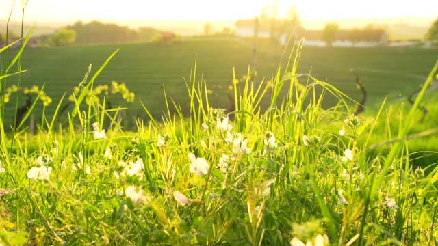 hd dolly: slowenische hills - graspflanze stock-videos und b-roll-filmmaterial