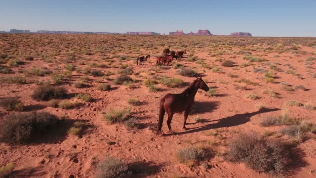 slow close pull away wild horses, drone aerial 4k, monument valley, valley of the gods, desert, cowboy, desolate, mustang, range, utah, nevada, arizona, gallup, paint horse .mov - paint horse stock videos & royalty-free footage