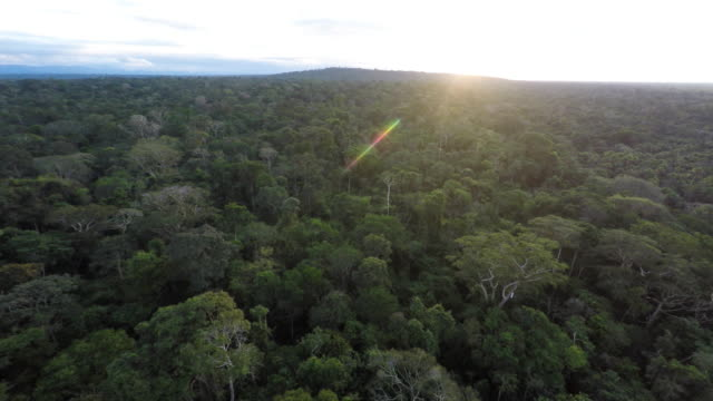 slow descending sunrise aerial over amazon rainforest - twilight stock videos & royalty-free footage