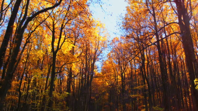 slow drive through fall trees, virginia - autumn stock videos & royalty-free footage