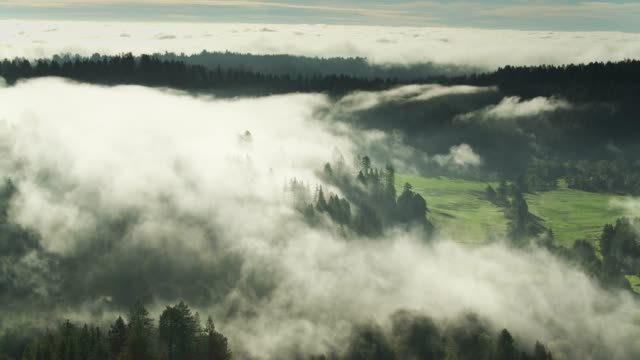 slow drone flight above morning fog - sequoia stock videos & royalty-free footage