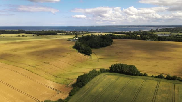 slow drone flight over sunlit wheat fields in summer with a view to the baltic coast - tina terras michael walter stock videos & royalty-free footage