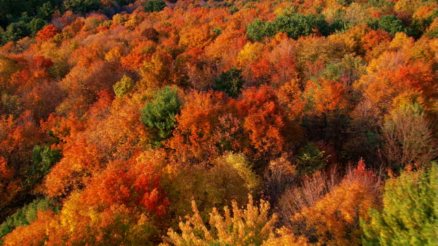 Slow flight across wooded hills in brilliant fall colors