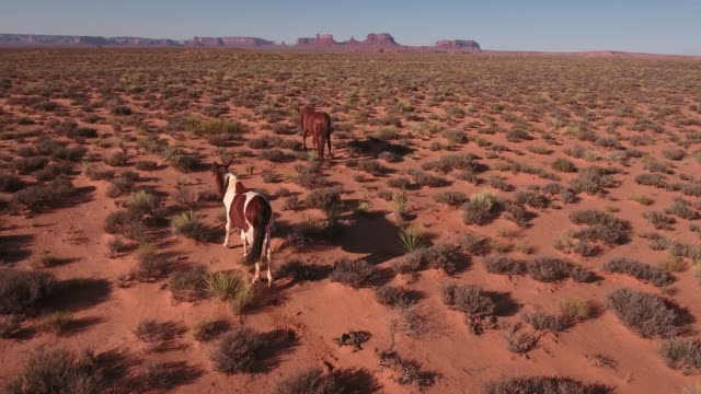 slow follow tracking behind wild horses, drone aerial 4k, monument valley, valley of the gods, desert, cowboy, desolate, mustang, range, utah, nevada, arizona, gallup, paint horse .mov - paint horse stock videos & royalty-free footage