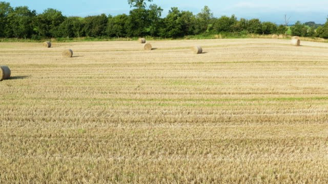 slow forward dolly shot from a drone of round straw bales in a scottish field - johnfscott stock videos & royalty-free footage