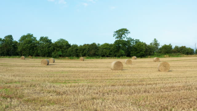 slow forward dolly shot of round straw bales in a scottish field - johnfscott stock videos & royalty-free footage