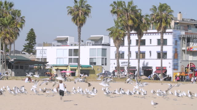 Slow Mo of Venice Beach Palm Tree, Building, Seagull and Birds Flying