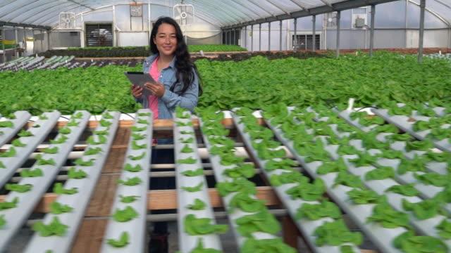 ws slow mo ts young woman growing vegetables in a nursery - koreanskt ursprung bildbanksvideor och videomaterial från bakom kulisserna
