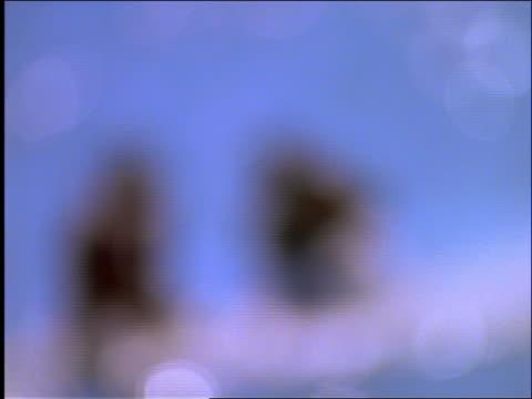 stockvideo's en b-roll-footage met slow motion 2 couples splashing each other with pails of water / beach - eendelig zwempak