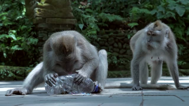 Slow Motion: Adorable Monkey Trying to Drink From Side of Plastic Bottle