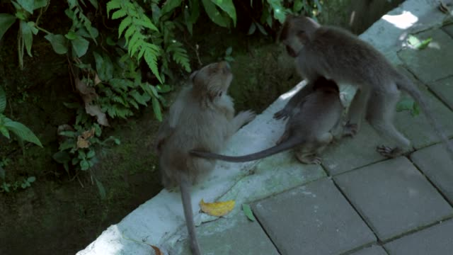 Slow Motion: Adorable Monkeys Playing