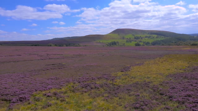 slow motion aerial drone footage of the yorkshire moors landscape with heather in bloom - heather hunter stock videos & royalty-free footage