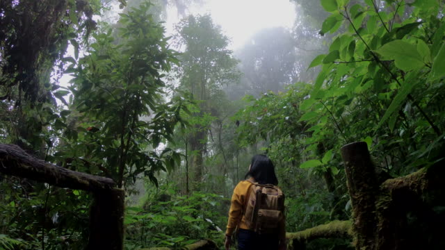 slow motion asian woman backpacker walking in rain forest natural trail. - non urban scene stock videos & royalty-free footage