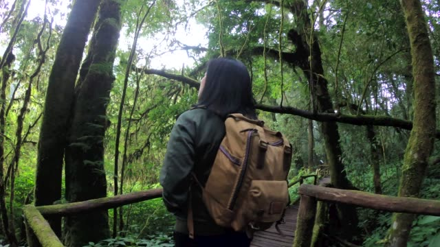 slow motion asian woman backpacker walking in rain forest natural trail - chiang mai province stock videos & royalty-free footage