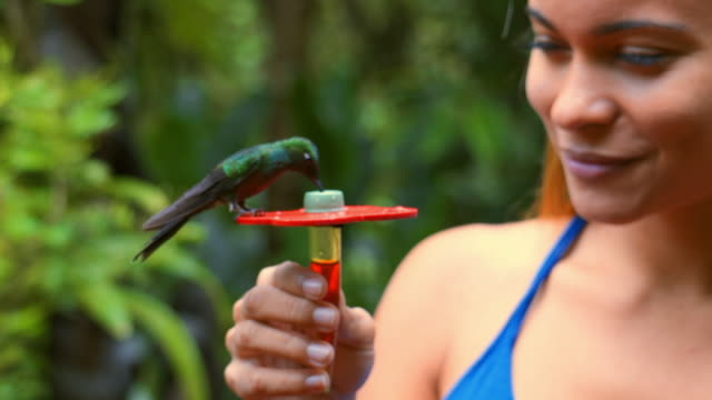 slow motion: beautiful woman with green-crowned brilliant birds - becco video stock e b–roll